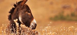 Le Puits, Le Fermier Et L'âne