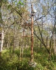 """Old railroad signal in the woods. It just screams """"climb me."""" (c) 2015 J.S.Reinitz"""