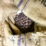 raw cocoa beans - chocolate