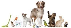 Mutuelle santé animaux Mayotte