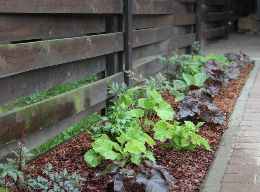 Растения для теневого цветника. Теневыносливые кустарники и травянистые многолетники