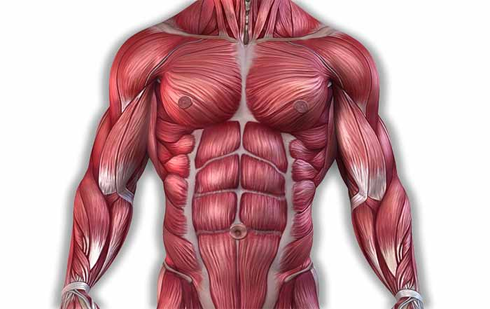 Optimum Muscle Glycogen Stores Mean Higher Athletic Performance