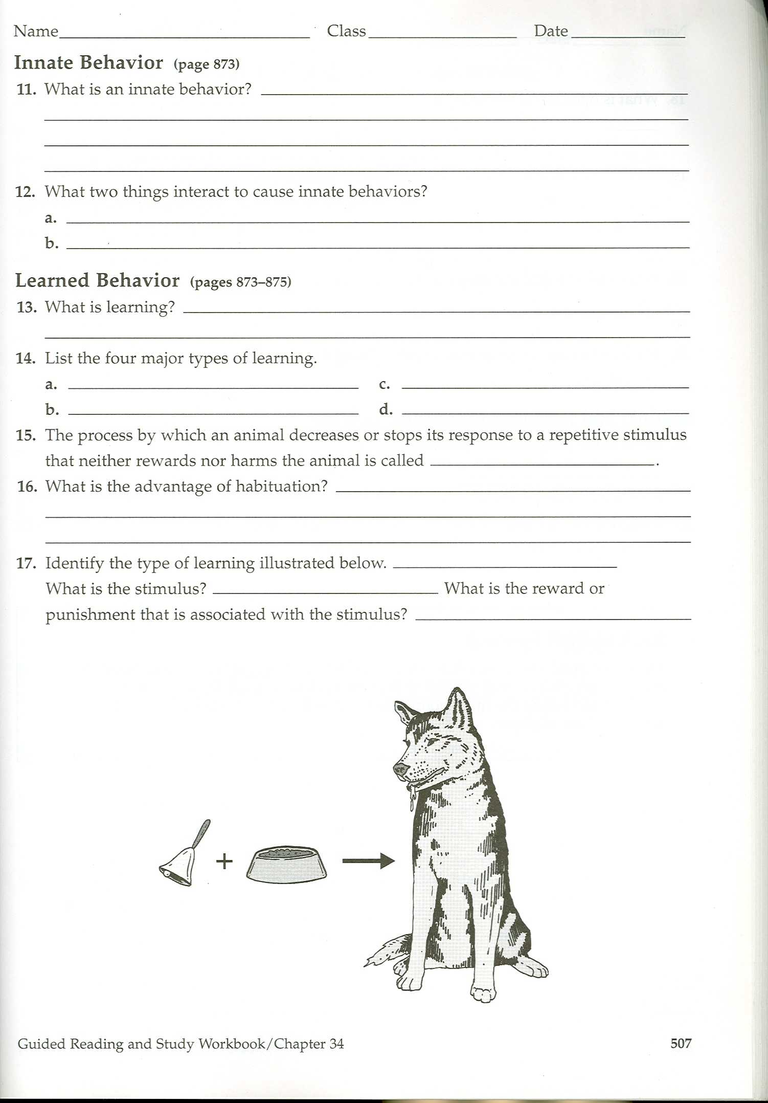Worksheet Introduction To Animals Worksheet Worksheet