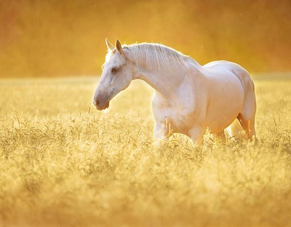 equine resources  u2013 asc