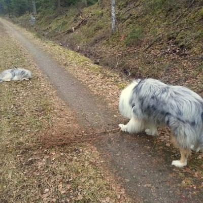 Liten hund, liten pinne – stor hund, stor pinne!