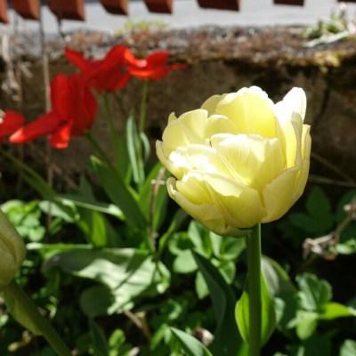 En liten trädgårdspromenad