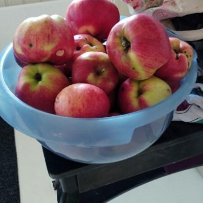 De sista äpplena