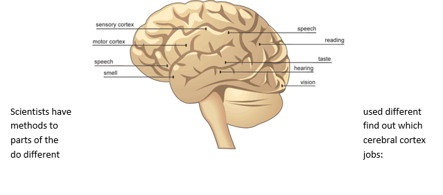 B6.2 How is information passed through the nervous system ...