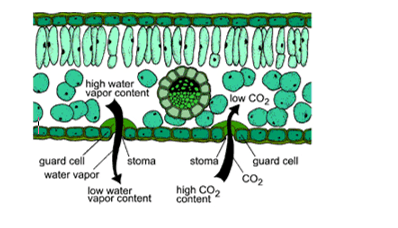 Exchange Surfaces • A* Biology