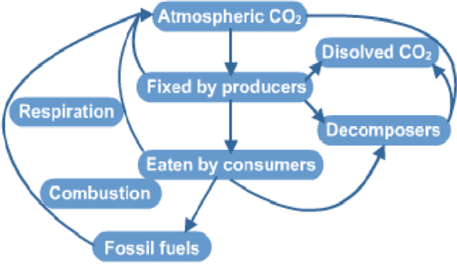 The carbon cycle a biology the carbon cycle is how carbon moves through living organisms and the non living environment it involves four processes ccuart Image collections