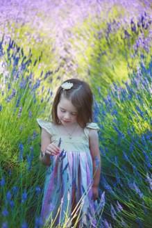 A the lavender farm