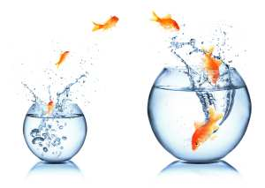 fish are jumping from a small bowl to a large bowl to demonstrate growth and expansion
