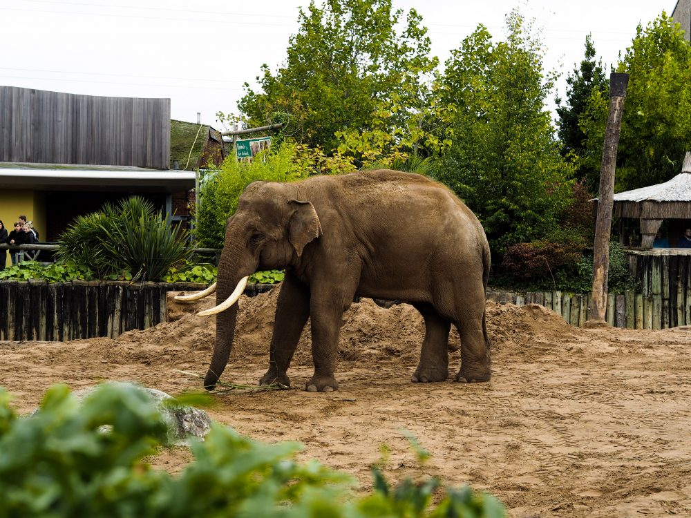 Visiting Chester Zoo
