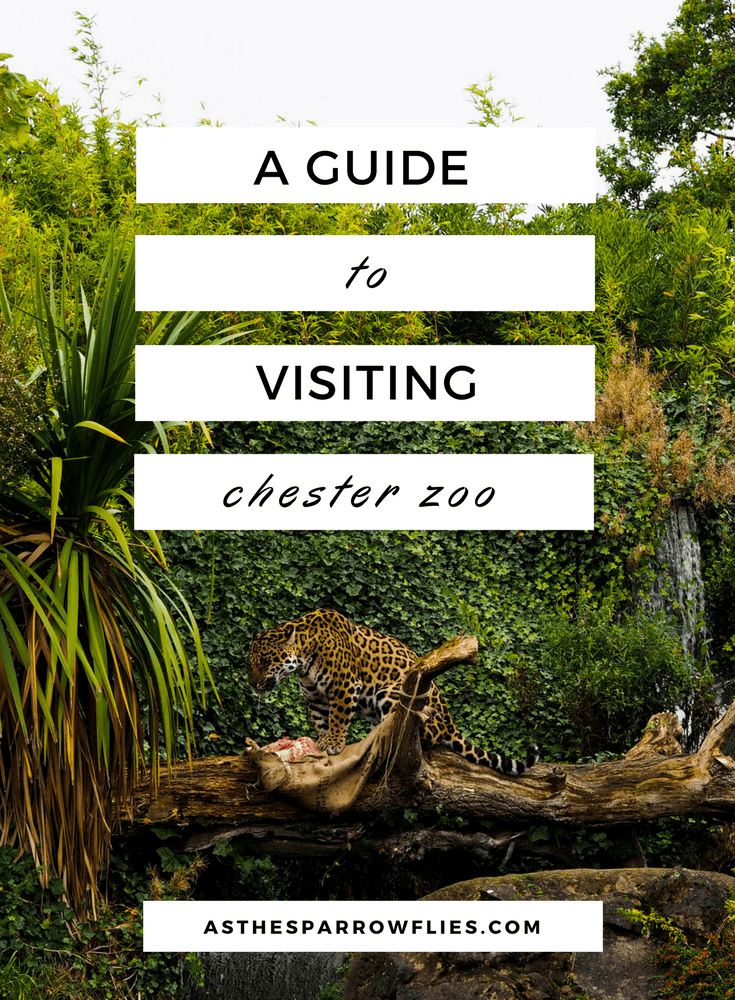 Visiting Chester Zoo | Chester City Break Guide | Visit Chester in the UK | UK City Break | Cheshire