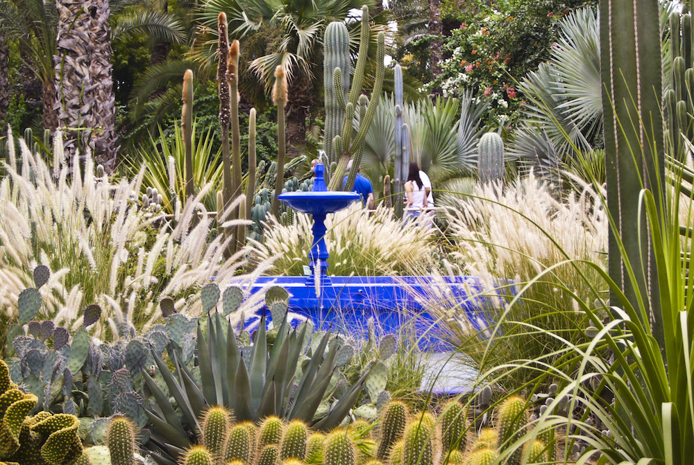 Long Weekend in Marrakech Garden Majorelle