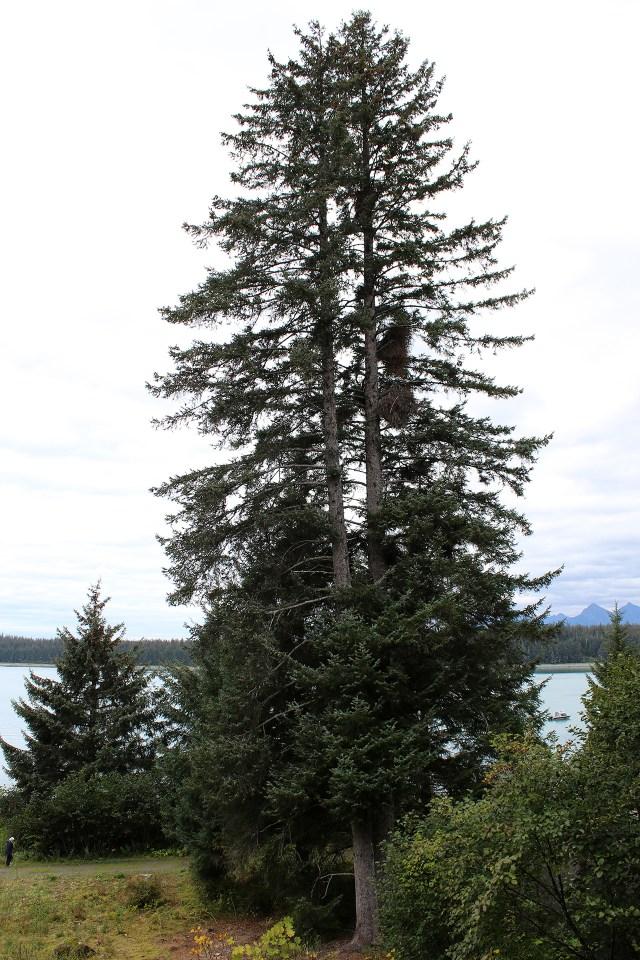 alaska-1812