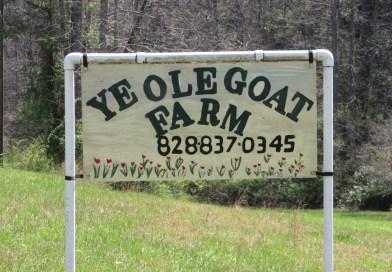 Field Trip Friday: Ye Ole Goat Farm