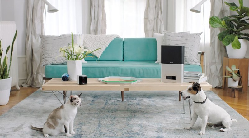 A Pet Camera Lets You Interact With Your Pet While You're Away