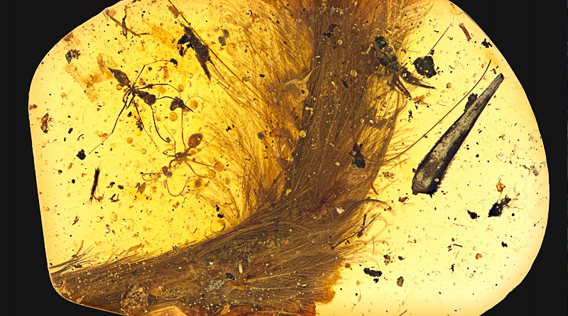 99 million Year Old Dinosaur Tail Found Preserved in Amber 'Jurassic Park'-Style
