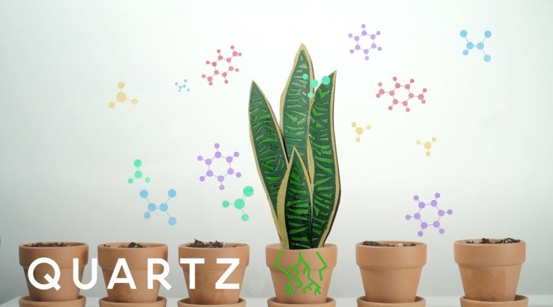 NASA Recommends Having these Plants in Your House