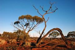 The Great Australian Desert