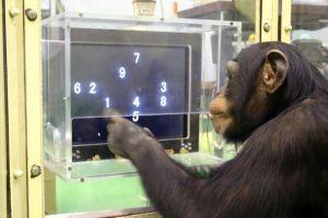 monkeyoncomputer