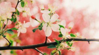 九星気学で読む2020年4月のムードと運勢をお届け!