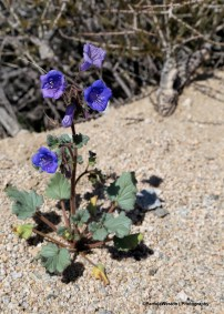 3-10-WildflowerGsign