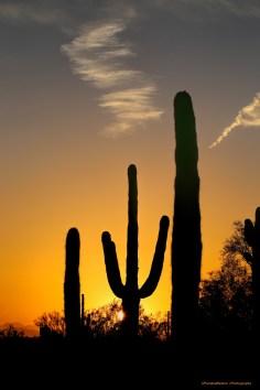 Saguaro sunsets