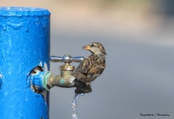 A leaky faucet is a bonus in the Mojave desert