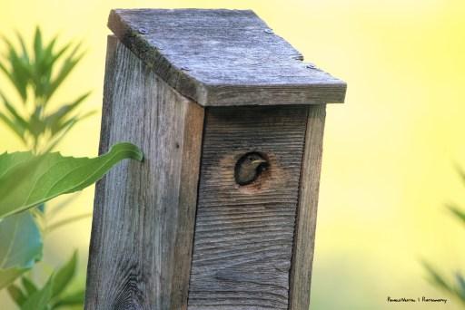Hello there baby bird!