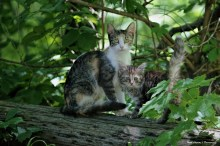 Feral cat and kitten