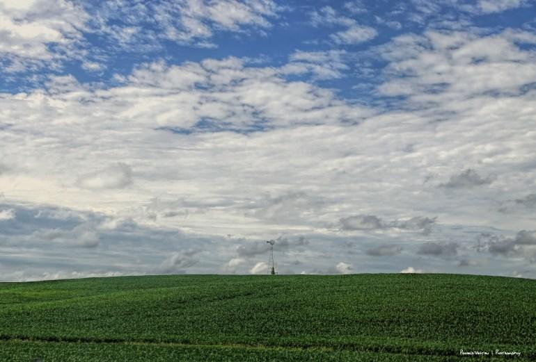 Corn as far as the eye can see