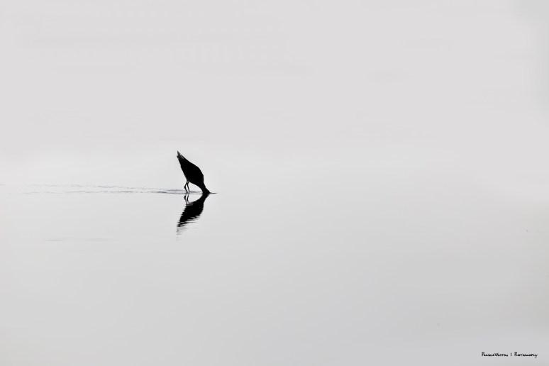 1-8-minimalismo