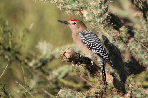 The Gilas were fond of the hummingbird feeder