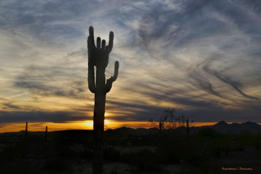 A Saguaro sunset