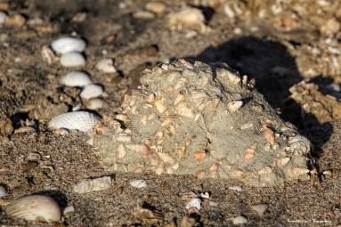 A land made of seashells...fantastic!