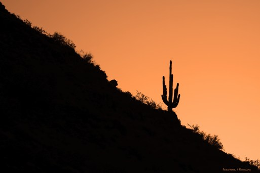 I did finally find my lone Saguaro, for a sunrise!:)