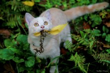 Yummy, I caught these leaves!