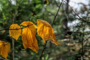 wilted and ready to Fall
