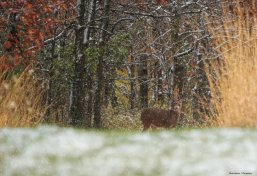 Peekaboo young lady-White Tailed Deer
