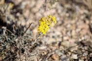 Wildflowers still in bloom