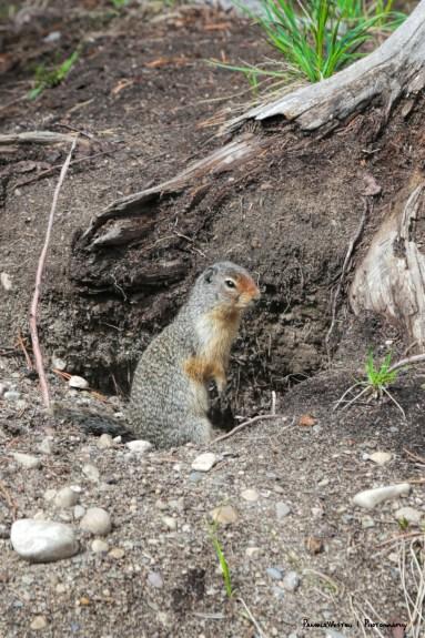 Furry neighbour