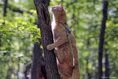 Up a tree after a chipmunk