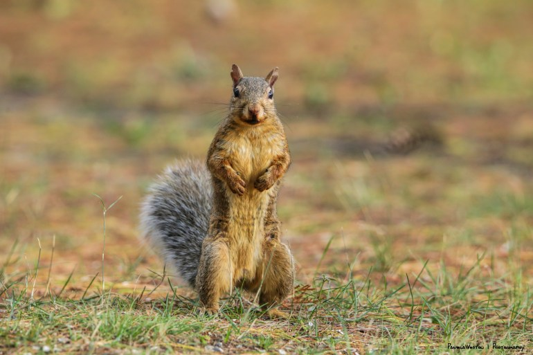 """""""Hey Lady! Bring back that feeder! Don't make me come after you! signed Squirrel DeNiro"""