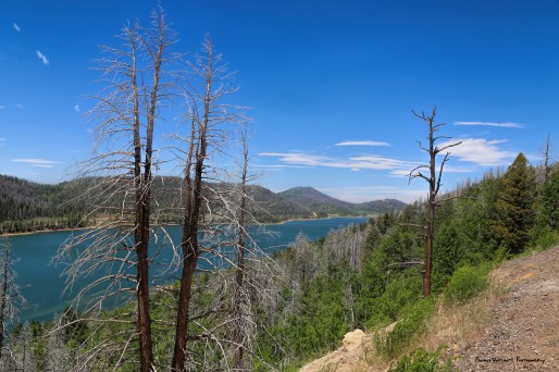 Navajo Lake, formed by a lava flow damming the canyon