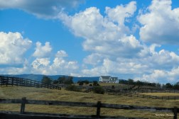 ah...horse farms and fences that go on for miles