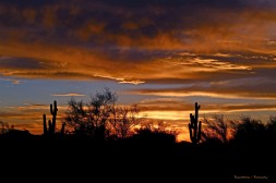 I walked all over looking for that one solitary saguaro...close, but it was a beautiful sunset