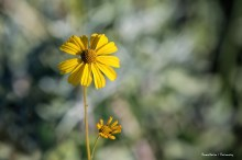 The simple beauty of yellow