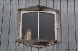 The barn greeter, Emily